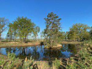 Rondom de Theetuin 3 – Eilandvijvertjes